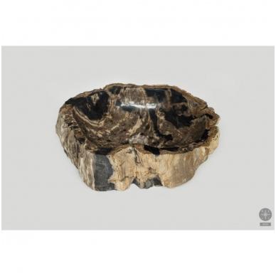 Fosilijos praustuvas suakmenėjęs medis 41*51*15cm