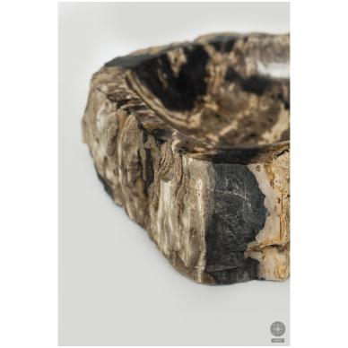 Fosilijos praustuvas suakmenėjęs medis 41*51*15cm 2
